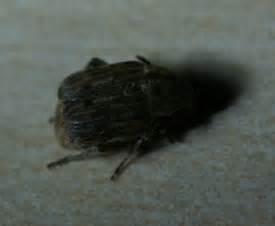 bett käfer schlafzimmer kleine k 228 fer im schlafzimmer kleine k 228 fer