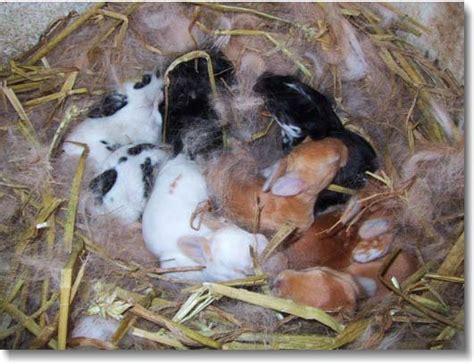Hair Dryer Kelinci secapramana bird breeder