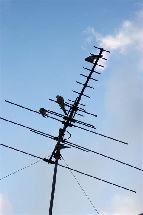 file television antenna jpg wikimedia commons