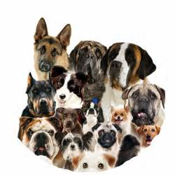 1341822330 412043416 1 all types dog breeds all over india jpg