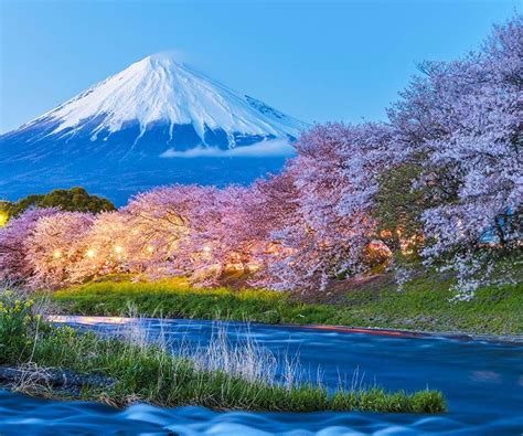 Cherry Blossoms by Japan Holidays And Tours Visit Japan With Wendy Wu Tours