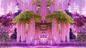 what color is wisteria magnificent colors of wisteria hd1080p