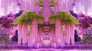 Wisteria magnificent colors of wisteria hd1080p youtube