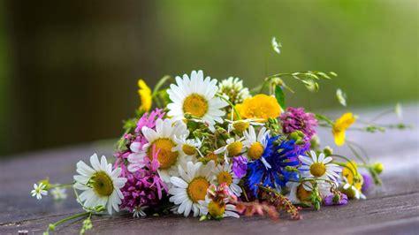 margherite fiori sfondi giallo fiorire margherite mazzi di fiori