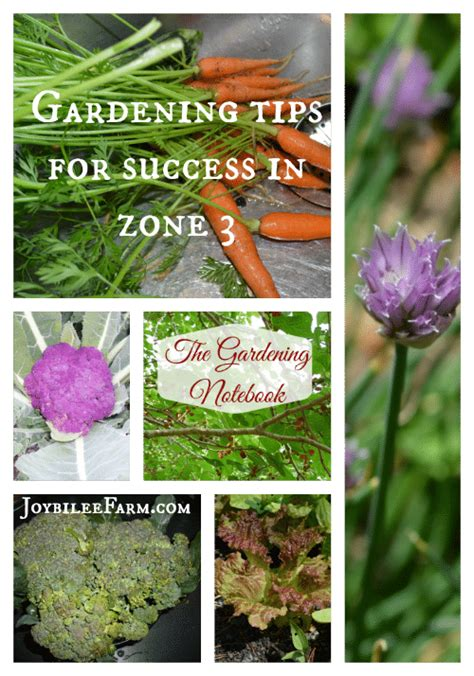 zone 3 gardening gardening tips for zone 3 20 vegetables you can grow