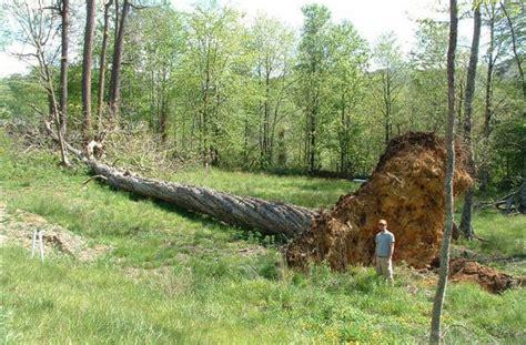 edge slabs walnut pine maple cherry oak bark house