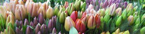 mercato fiori terlizzi benvenuti nel sito mercato dei fiori di terlizzi bari