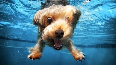 puppies in water puppies and water hd try not to laugh