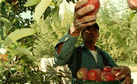 aumento trabajadores rurales 2016 cosechadores y embaladores frut 237 colas acordaron aumento