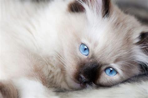lettiere gatto lettiere per gatti lindocat