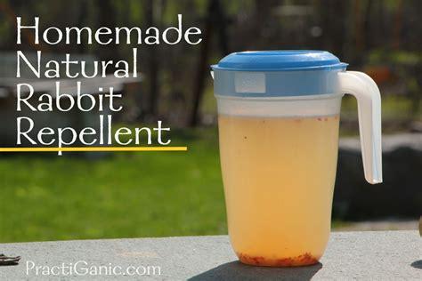 rabbit repellent for vegetable gardens rabbit repellent practiganic