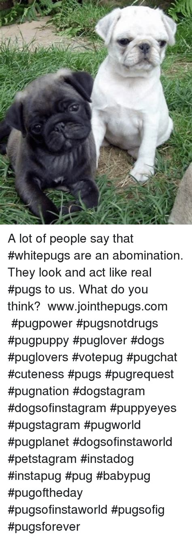 a lot of pugs pugs memes of 2016 on sizzle cars