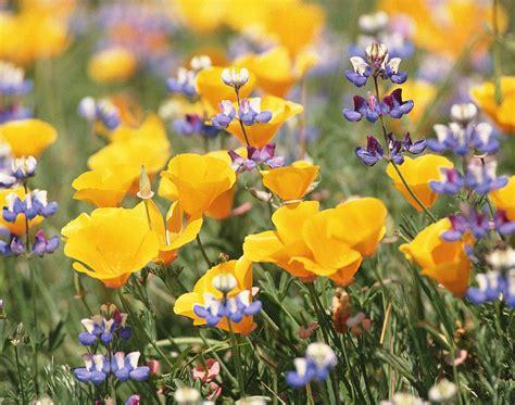 ci fiori floriterapia come strumento di sostegno e miglioramento