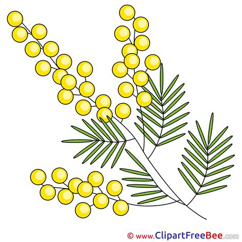 mimosa clipart mimosa clip for free
