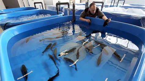 wann beißen welche fische fangfrisch wie nachhaltig ist unser fischkonsum