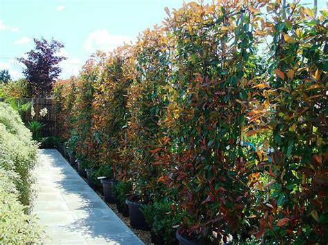 immergr ne pflanzen als sichtschutz 841 immergr 252 ne pflanzen als sichtschutz terrassensichtschutz