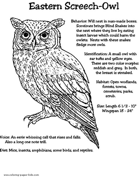 screech owl coloring page eastern screech owl color page