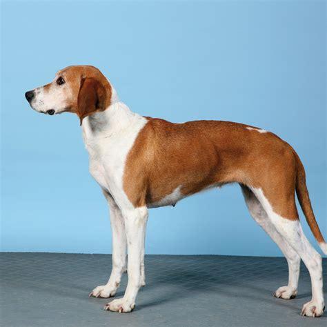 hygenhund breed guide learn   hygenhund