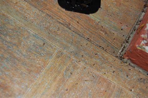 ants ants ants ants