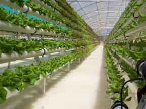 hydroponic gardening in the greenhouse interior design