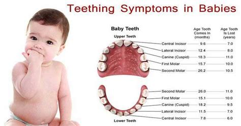 how to tell a 4yr how babies come out of mommys tummy teething child health care quot qsota quot tips and tricks doctors