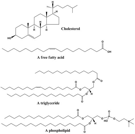 lipids diagram lipid