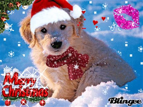 cute christmas dog picture  blingeecom