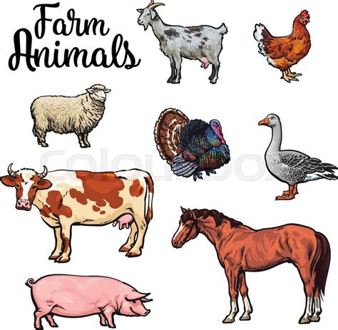 sheep swine and poultry embracing the history and varieties of each the best modes of their feeding and management together with the remedies for each classic reprint books farm animals cow pig chicken goose poultry livestock