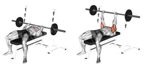 close grip barbell bench press arm blaster workout
