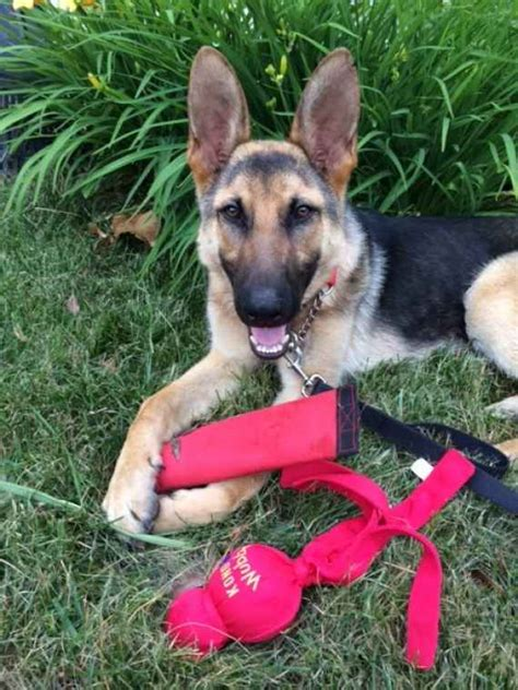 house training rescue dog display dog training rescue dogs
