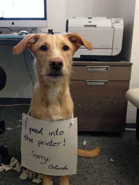 dog shaming desk 2149 best misunderstood animals images on pinterest