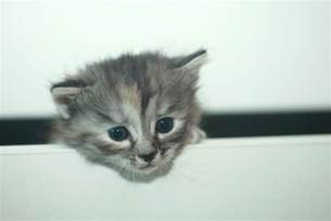 the curious character of cats and whether they are
