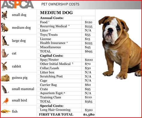 how much do cost for puppies how much do you really spend on your pet time