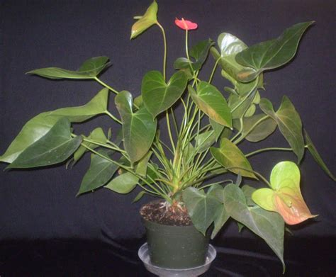 common house plant with shaped leaves plants are the strangest 2 7 10 2 14 10
