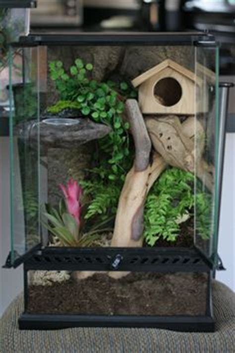 ideas  crested gecko enclosure images crested