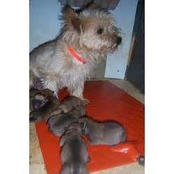 will a heat l keep a dog warm keep baby animals warm with a pet pad