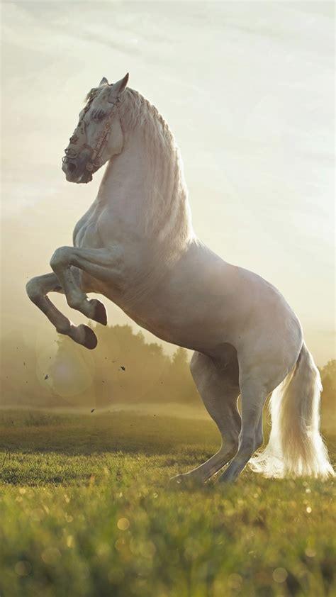 wallpaper horse cute animals sunset animals