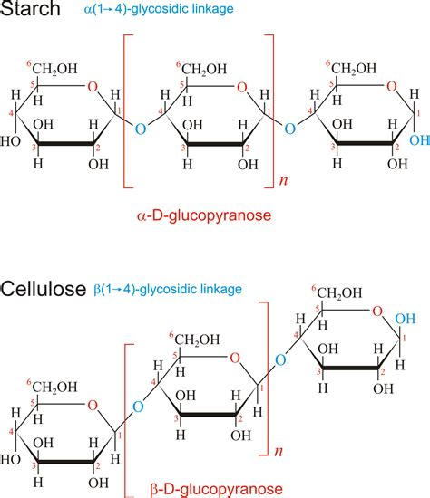 carbohydrates polysaccharides chemistry glossary search results for polysaccharide