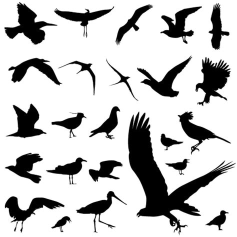 black and white bird tattoo designs birds tattoos and designs page 415