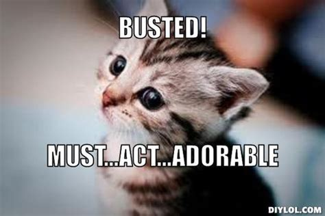 Cute Kitten Meme - the unbearable lightness of deferred corporate prosecution