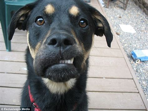 dogs who ate bees dogs stung by bees pose for pictures with swollen