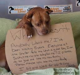 animal rescue home why doesn t anybody want me viral post leads