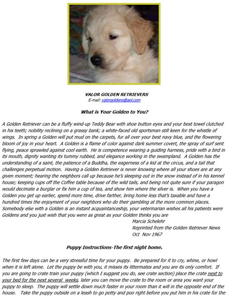valor golden retrievers valor golden retrievers information packet valor goldens
