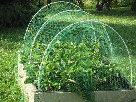 backyard netting how i protect my garden from wildlife part 1 abundant