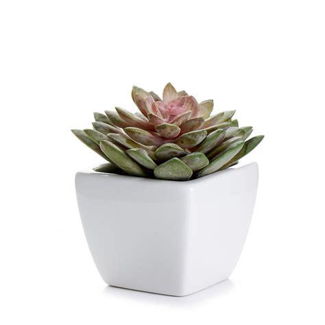succulent pots wilko succulent in ceramic pot at wilko com