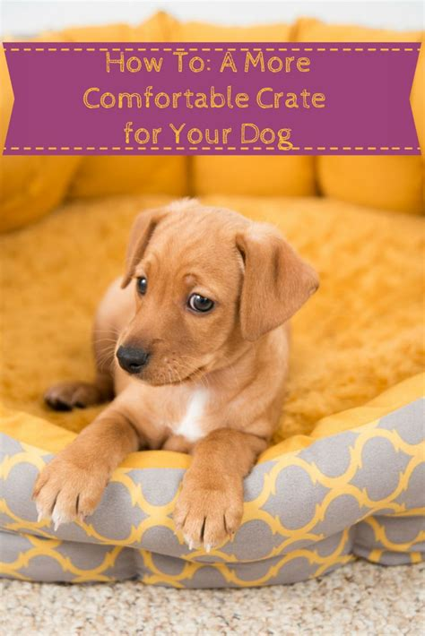 How To Make Your Dog S Crate More Comfortable In 6 Easy