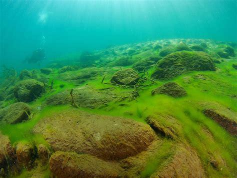 Algae Pictures