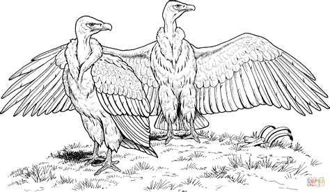 king vulture coloring page white rumped vulture coloring page free printable