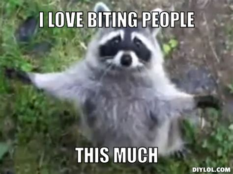 Meme Generator Raccoon - bad habits this might sound funny