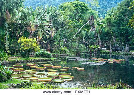 Largest Botanical Garden In The World Regia The Largest Water In The World Botanical Stock Photo Royalty Free Image